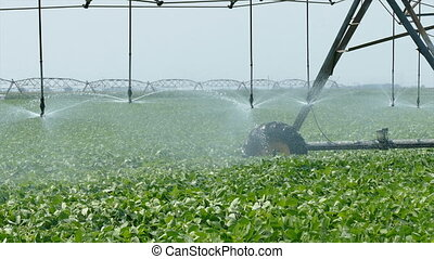 Agriculture soy bean field watering - Soybean field with...