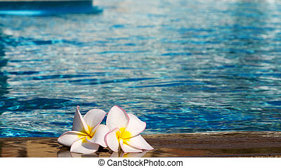 flower Plumeria on pool - Tropical flower Plumeria on...