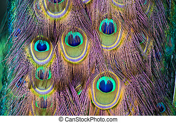 peacock feather - Background with patterns made of peacock...