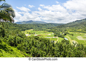Hanalai Valley farming crops in Hawaii - A large farming...