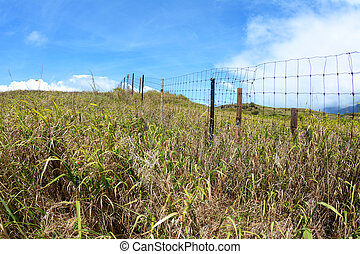 Wire fence in grassy field - A wire fence in a grassy field...