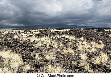 Grassy Lava Field - As years of dried lava rests untouched,...