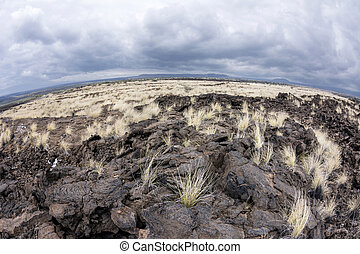 Lava field - As years of dried lava rests untouched, grass...