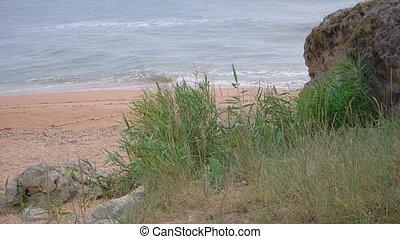 Tall grass on a beach