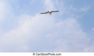 Hovering seagull against blue sky slowmo - Hovering seagull...