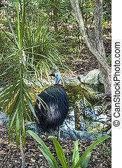 Big bird in a swamp - Big bird standing in front of an...