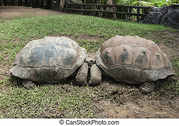 Two turtles in a zoo
