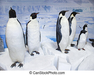 Stuffed penguin exibition - An exibition of a group of...