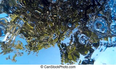Abstract underwater view - Underwater view on a sky and tree...