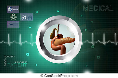 Pancreas, ,