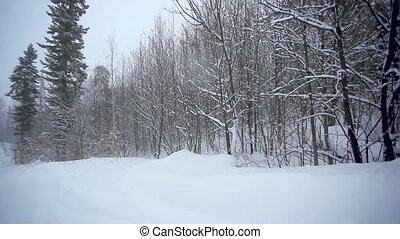 Skier going down the slope in mountains between trees at blizzard
