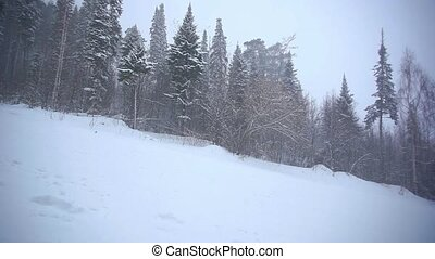Snowboarder going down the slope in mountains between trees at blizzard