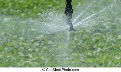 Agriculture, soybean field watering - Closeup of Irrigation...