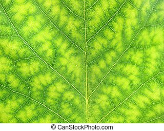 Close-up of green tree leaf nature - Close-up of a green...