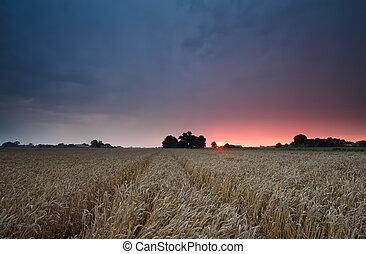 purple summer sunset over wheat field