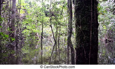 Flooded Rain Forest - Passing through the flooded Amazon...