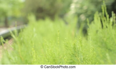 natural green background with selective focus. the camera...