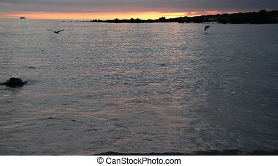 Pelicans Fishing - Pelicans fishing at sunset in the...