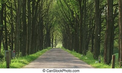 Avenue of trees - driveway to a medieval castle or estate -...