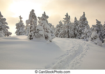 Footprints in snow - Idilic winter scene wirh snow and...