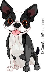 Boston Terrier  - Illustration of cute Boston terrier