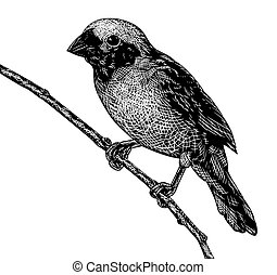 Scratchboard bird - EPS8 editable vector sketch of a...