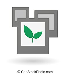 Isolated group of photos with a plant