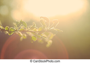 Soft Light Branch - Photo with soft light on the branch in...