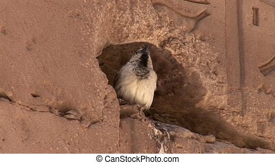 Bird In Temple In Egypt