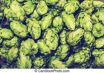 Fresh green hops on a wooden table. Blue toned