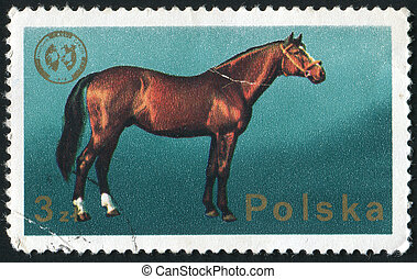 postmark - POLAND - CIRCA 1988: The horse is a hoofed...
