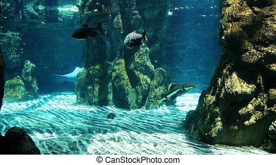 Manatees in the aquarium