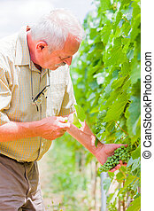 Horticultural examination - Senior professional winemaker...