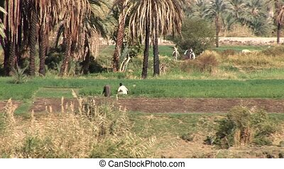 Farmers At Nile Riverside