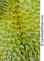 close up of the durian skin