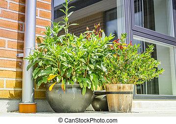 Flower pots on a terrace