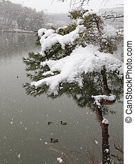 heavy snow on the lake - white snow falls on the pine tree...
