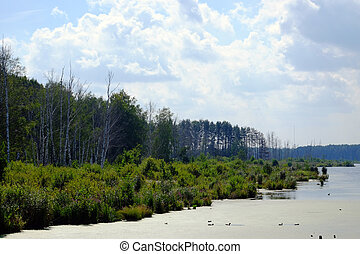 Lake in a forest - Lake overgrown with reeds on the...