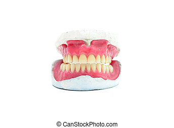 teeth mold - human wax dental teeth mold isolated on white