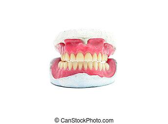 teeth mold - human wax dental teeth mold isolated on white