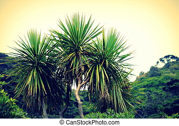 Cabbage Tree - Cordyline australis, commonly known as the...