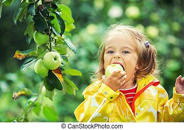 Little girl in the apple garden - Little girl eating fresh...