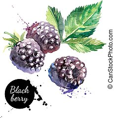 Hand drawn watercolor painting blackberry on white...