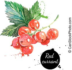 Hand drawn watercolor painting red currants on white...