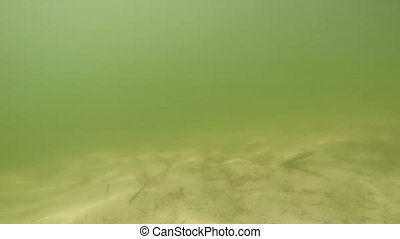 Underwater sandy lake bottom with glare from the water