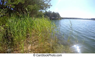 Grass sways in the wind on lake