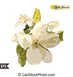 Isolated flower on a white background.