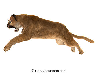 Puma - 3D digital render of a big cat puma jumping isolated...