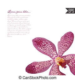Floral invitation card with beautiful spring tropical  flower and banner style. Perfect for wedding, greeting design.