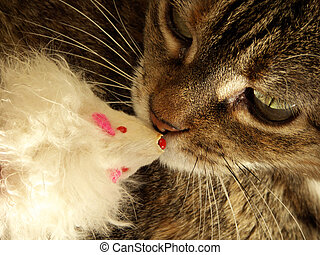 Friends - Cat and mouse toy enjoying the moment - right...